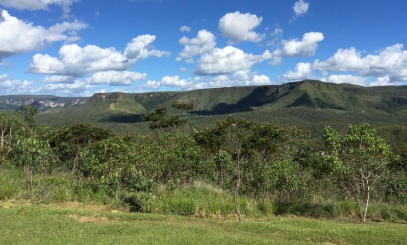 A vegetação do Cerrado apresenta bastante diversidade paisagística, composta por árvores e arbustos.