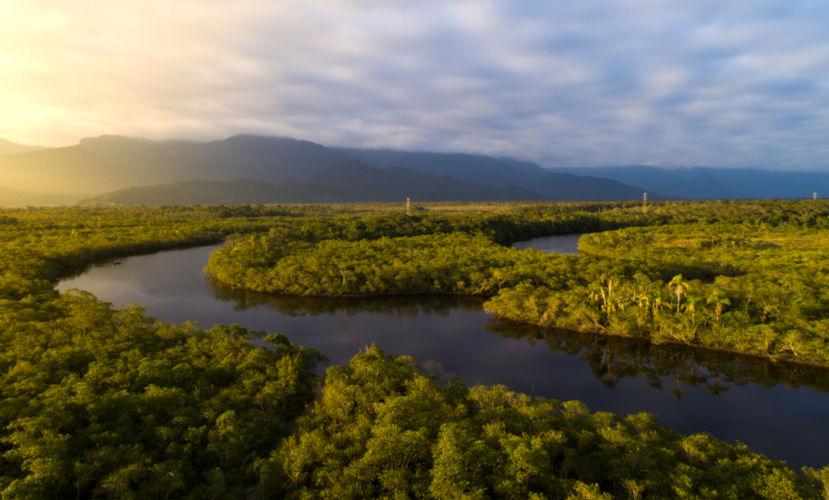 O bioma Amazônia é um dos biomas de maior biodiversidade do mundo.