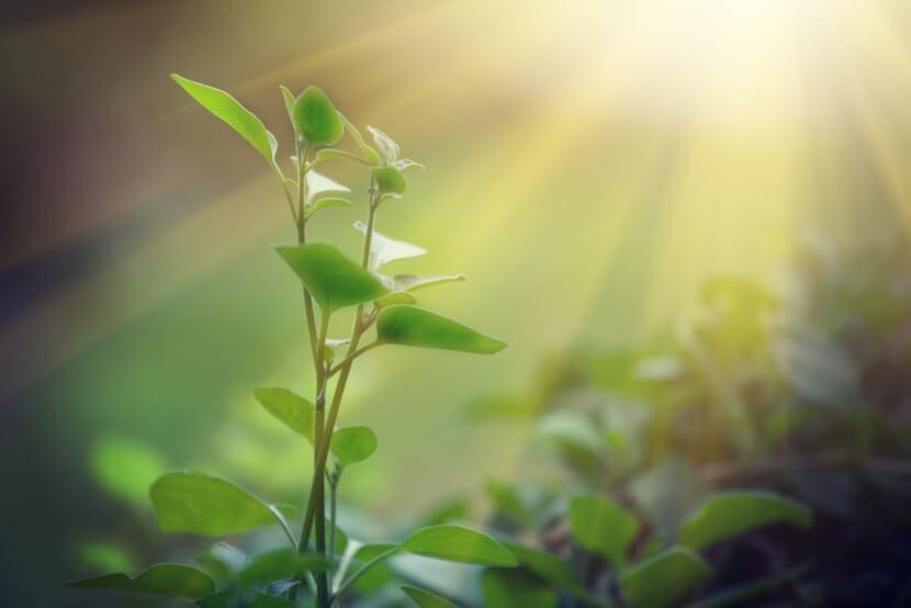 A fotossíntese converte energia solar em energia química, utilizando a última para realização da síntese de compostos orgânicos.