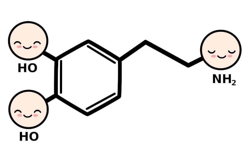A dopamina atua sobre as funções de neurotransmissão relacionadas à atenção, ao aprendizado e às emoções, por exemplo.