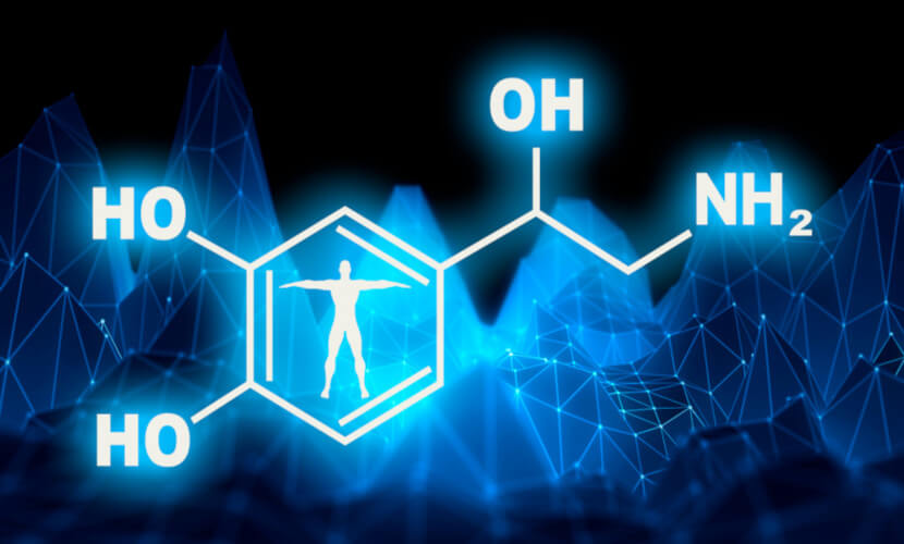 A noradrenalina é um hormônio da família de catecolaminas e atua também como um neurotransmissor do sistema nervoso autônomo.