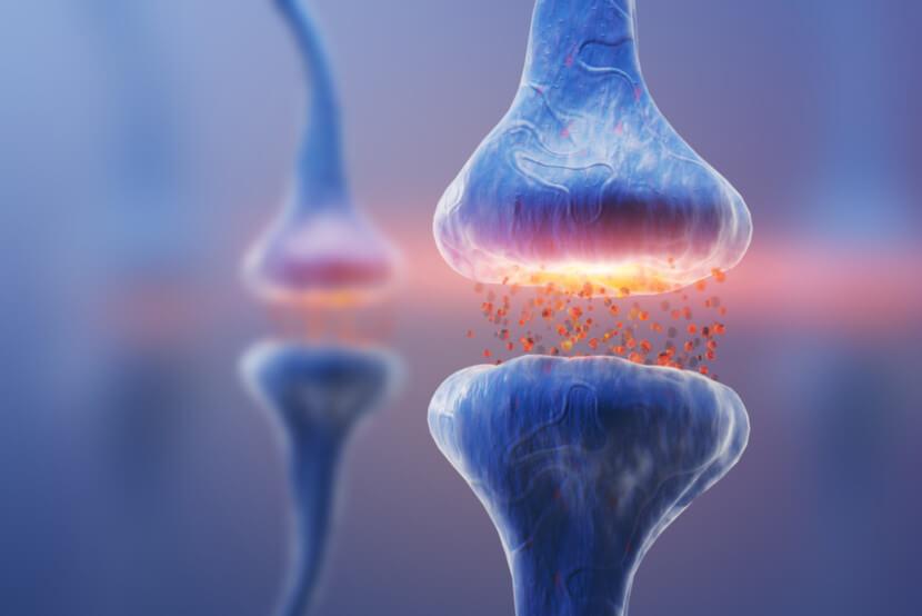 Os neurotransmissores transformam os impulsos em sinais químicos, para serem encaminhados ao próximo neurônio, em locais denominados sinapses.