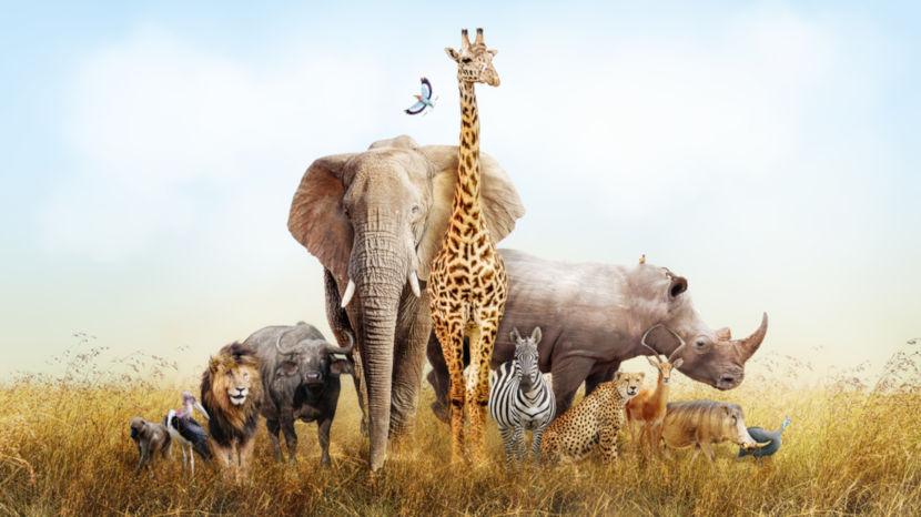 O Dia Mundial dos Animais é comemorado no dia 4 de outubro.