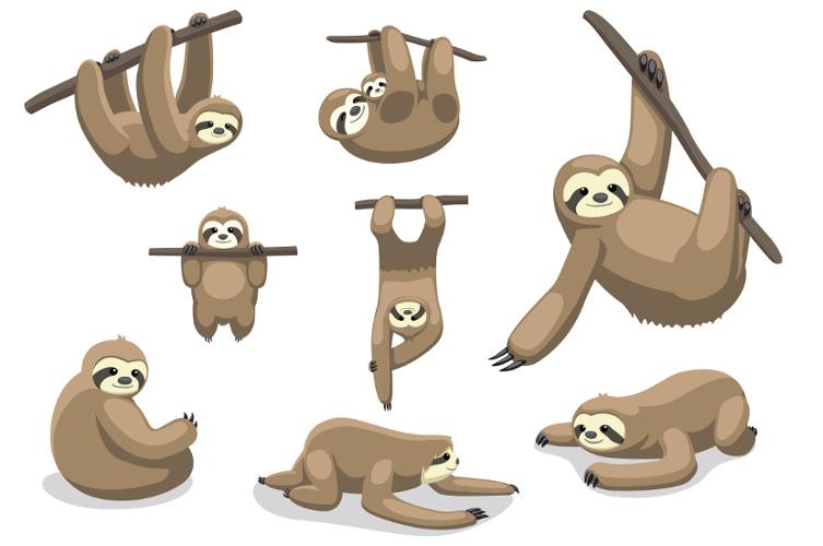 O bicho-preguiça habita desde a América Central até a América do Sul, e uma de suas principais características é o lento movimento.