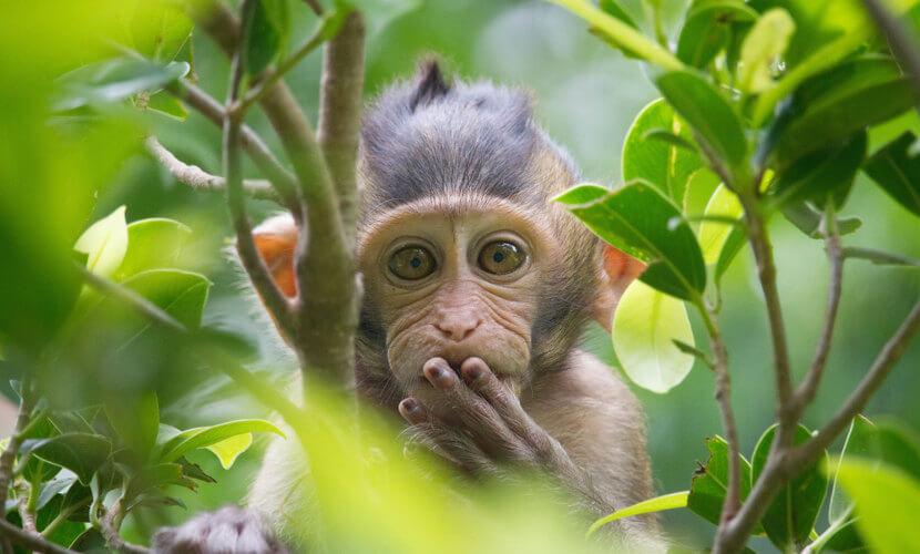 O macaco é um eutério.