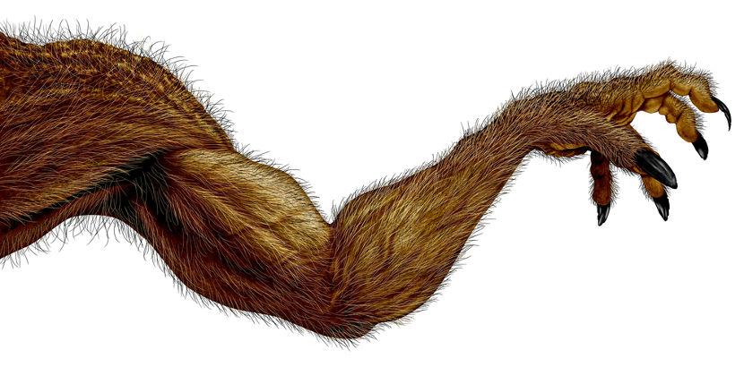 Além da grande força física, o lobisomem é conhecido por ter longas garras.