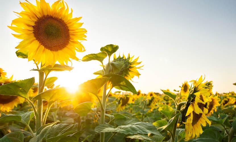 As plantas são organismos que exercem um papel importante no meio ambiente.