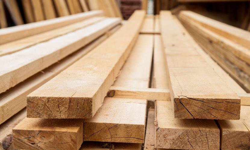 As plantas são usadas pelo ser humano para fins econômicos, como no uso de madeira.