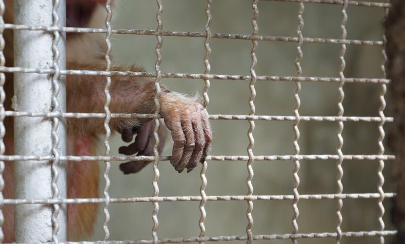 O tráfico de animais é crime. Não compre animais silvestres de maneira ilegal.
