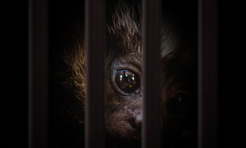 O tráfico de animais causa desequilíbrio no meio ambiente.