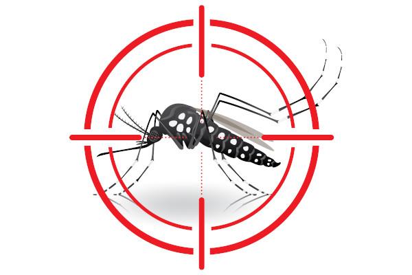 O Aedes aegypti é o mosquito responsável pela transmissão do vírus causador da dengue.