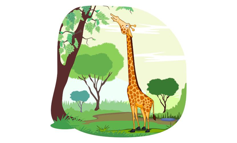 A girafa pode ser usada como exemplo para explicar a seleção natural.