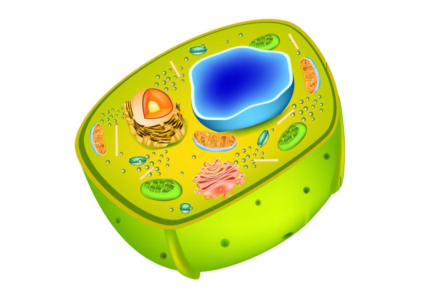 Todas as células possuem membrana plasmática, citoplasma e material genético.