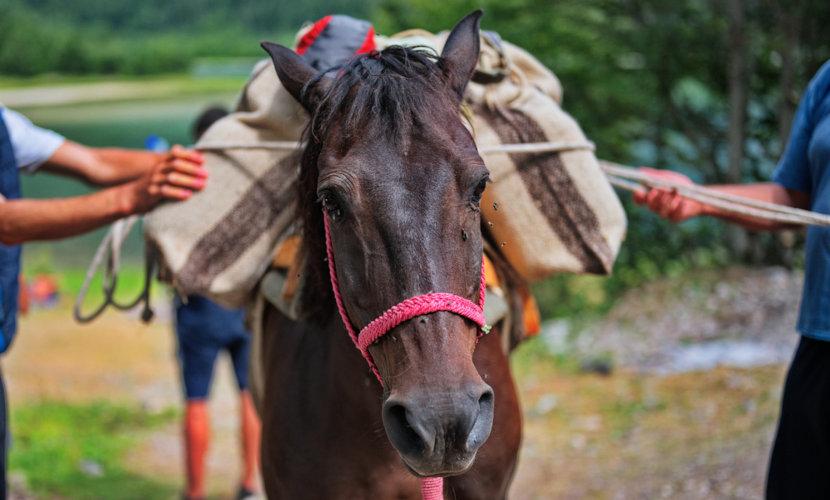Cavalo transportando carga