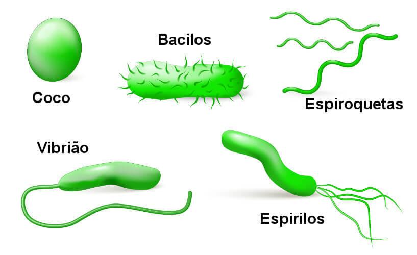 Observe os diferentes tipos de bactérias segundo suas formas.