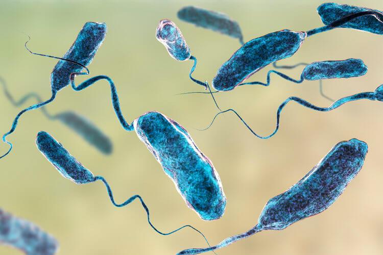 A cólera é causada pelo Vibrio cholerae.