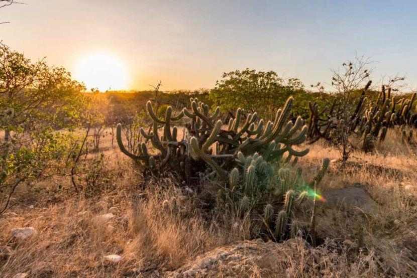 A Caatinga é um bioma exclusivamente brasileiro e encontra-se em uma região bastante seca.