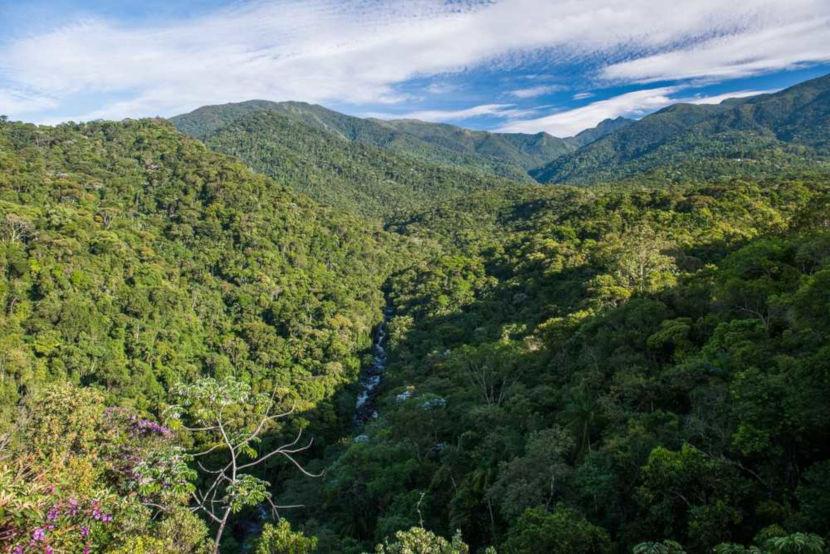 A Mata Atlântica possui uma floresta densa e contínua.