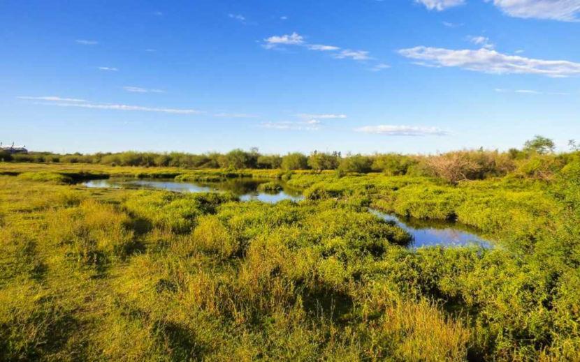 O bioma Pampa possui vegetação rasteira conhecida como campos nativos.