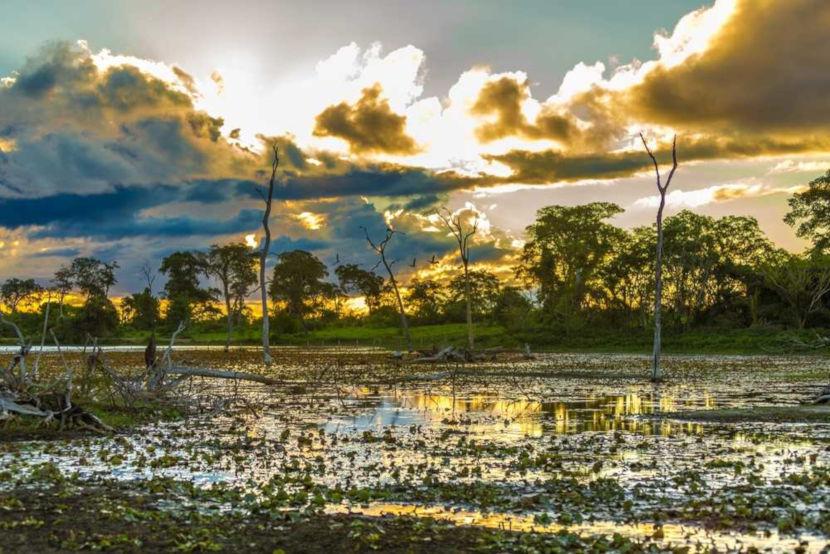 O Bioma Pantanal é considerado uma das maiores planícies alagadas do mundo.
