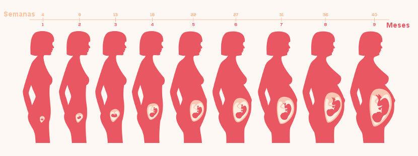 Durante a gravidez, o útero aumenta consideravelmente de tamanho.