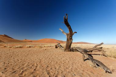 O deserto é uma área com pouca existência de vida