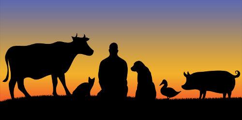 Todos os animais possuem seu espaço no planeta