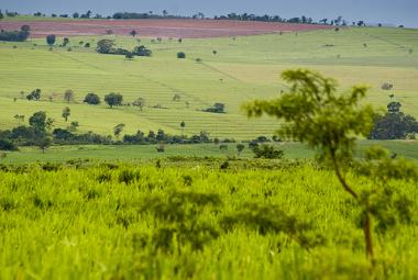 A expansão agropecuária é uma das causas da degradação do Cerrado