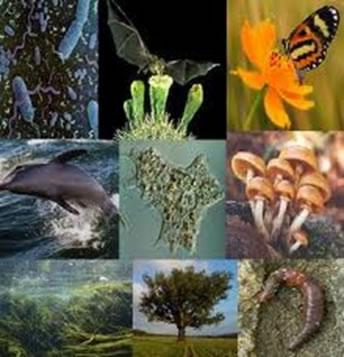 Todos os organismos vivos realizam algum tipo de respiração