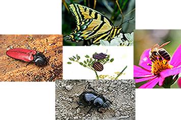 Os insetos formam o grupo com maior numero de espécies conhecidas entre os artrópodes