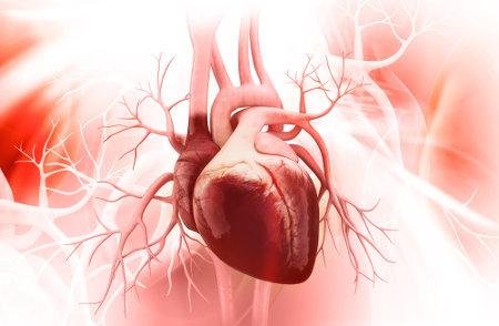 O coração humano é diferente do coração de peixes, anfíbios e répteis