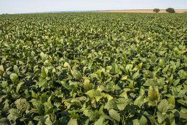 Campo de cultivo de soja no Tocantins. A Revolução Verde permitiu a ampliação dos espaços agricultáveis