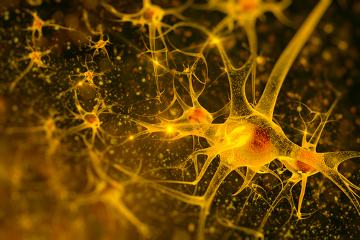 Os neurônios são responsáveis por transmitir os impulsos nervosos