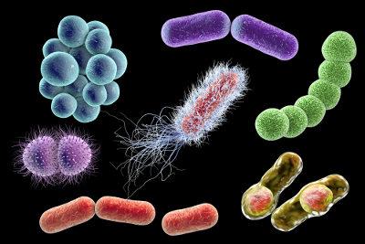 As bactérias são organismos pertencentes, segundo a classificação de Whittaker, ao reino Monera