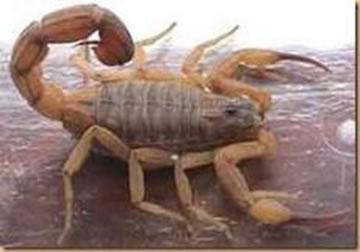 escorpiões escola kids