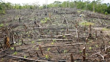 O desmatamento é um dos maiores problemas do nosso país
