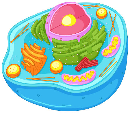 A célula eucarionte possui material genético protegido por uma membrana