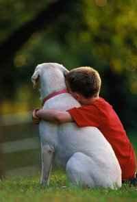 Animais também são amigos e merecem ser tratados com respeito