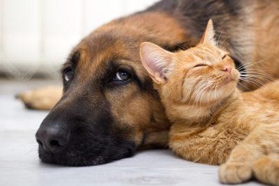 Gatos e cachorros são seres vivos porque eles possuem células, reproduzem-se e sofrem evolução
