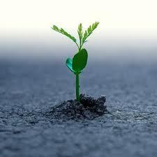 Para que uma semente consiga germinar, ela precisa que o ambiente tenha condições adequadas, como água e oxigênio