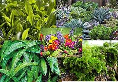 Classifica o das plantas como se d a classifica o das for Que planta para muro exterior vegetal