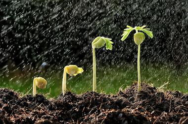 Alguns agentes climáticos (como a chuva e a temperatura) são importantes para a agricultura