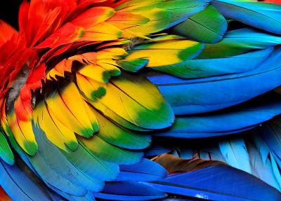 As aves são os únicos animais viventes que possuem penas