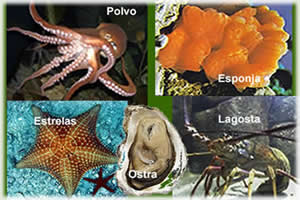 Invertebrados marinhos