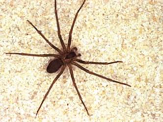As aranhas não são insetos