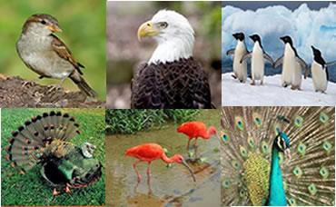 Existem no mundo diversas espécies de aves