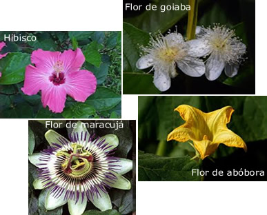 Na natureza podemos encontrar flores com características bem variadas