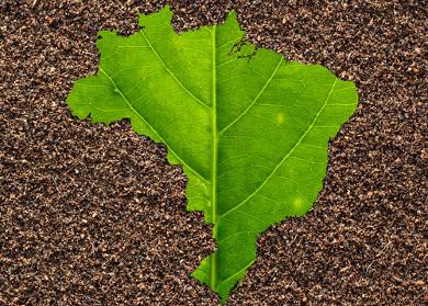 O Brasil possui vários tipos diferentes de solo