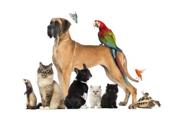 Os animais são classificados em carnívoros, onívoros e herbívoros