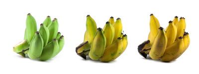 Cacho de bananas amadurecendo ao longo do tempo